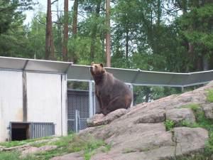 2014-07-03 Kolmårdens djurpark 007
